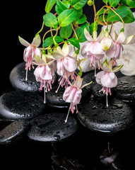 spa setting of branch pink fuchsia flower, towels and zen basalt