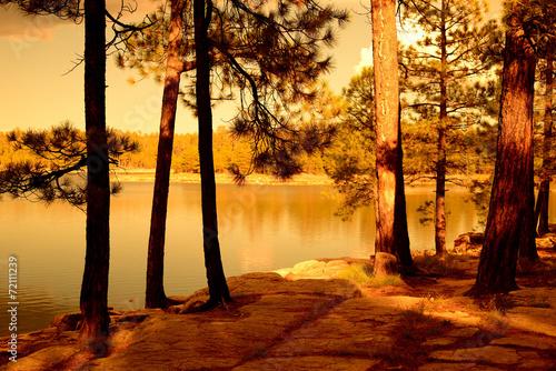 Golden light forest lake
