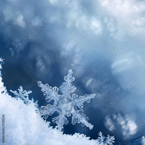 In de dag Water planten Snowflake Edge