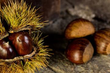 Chestnuts closeup on a rustic stone in a studio shot