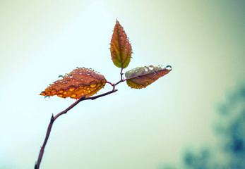 Small leaves on autumnal tree branch with water drops