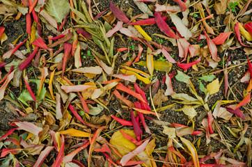 Листья деревьев на земле