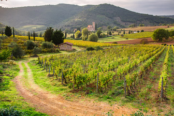 View of the vineyards and the church in Tuscany