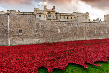 Les coquelicots de London Tower
