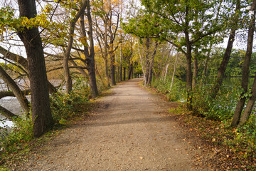 Herbstspaziergang im Wald