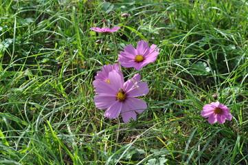 fleurs dans l'herbe