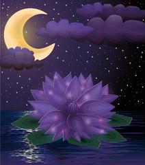 Magic lotus flower background, vector illustration