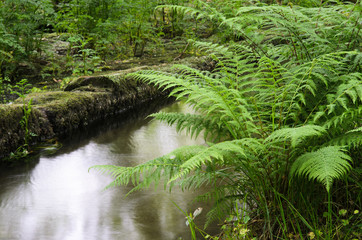 Ferns and water