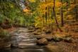 Forest Stream In Autumn - 72119660