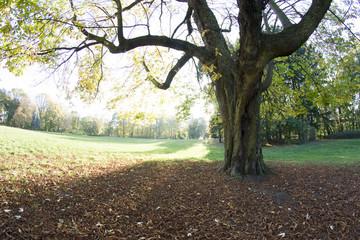 Jesienny park