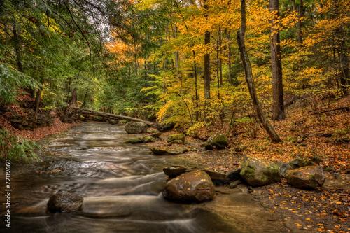 Fotobehang Watervallen Forest Stream In Autumn