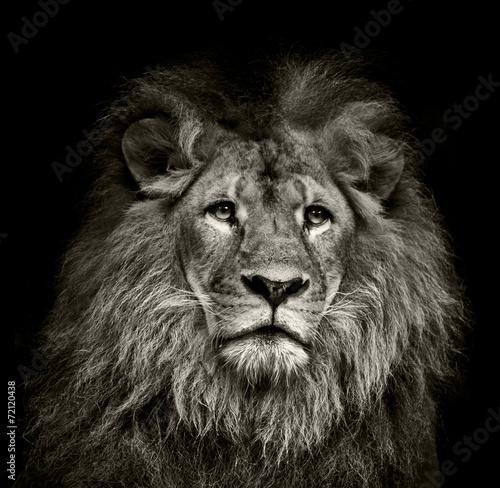 Foto op Canvas Leeuw sad lion