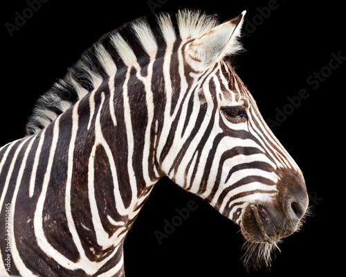 Deurstickers Algerije zebra