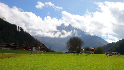 Mountain landscape with farm and cows