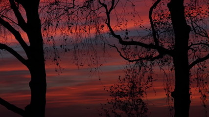 Bäume als Silhouette bei Sonnenuntergang