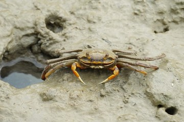 Portrait of a Spider Crab