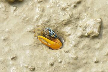 Portrait of a Blue Crab