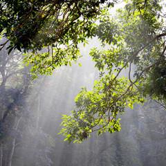 Sunlight and tree