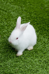 white rabbit in grass