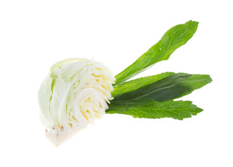 cabbage and coriander isolated on white background