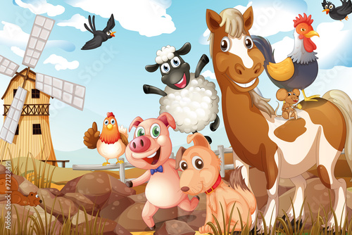 Animals - 72128491