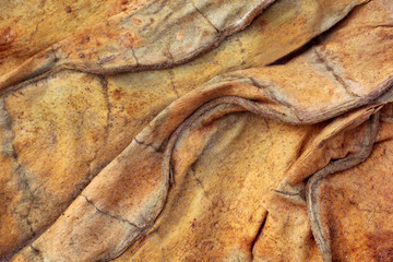 Dried tobacco leaves background