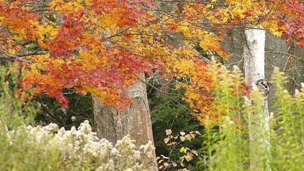晩秋の紅葉と落ち葉_1