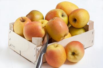 Pommes Tentation - Malus domestica - en vrac