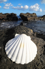 Limestone Sea Shell