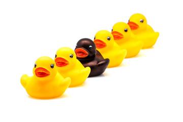 patos en linea