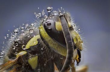 Arı Portre