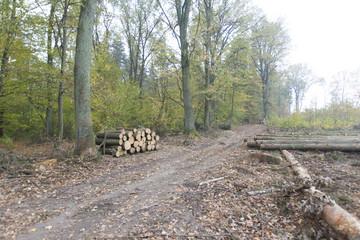 składowisko drzewa, leśna dróżka