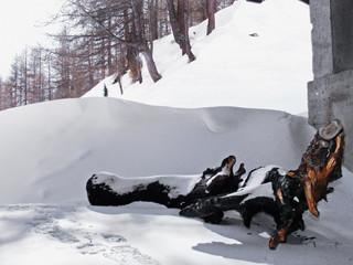 Tronco d'albero nella neve