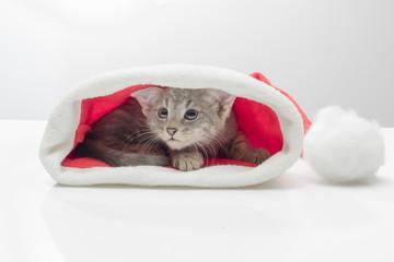 Kitten in a hat of Santa Claus