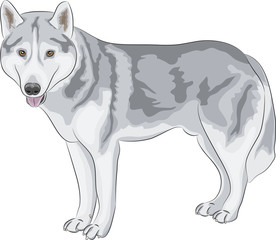 vector Czechoslovakian Wolfdog