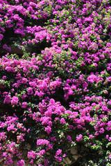 Hintergrund - Mediterrane Pflanzen