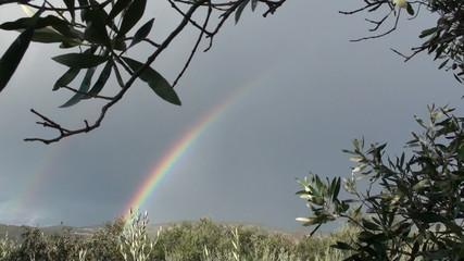 Rainbow and olive trees