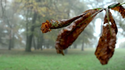 Autumn park (forest - trees) - fallen leaves  - tree branch