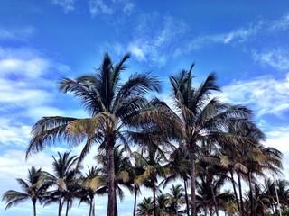 Summer sunny day in Miami