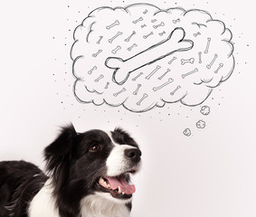 Border collie with thought bubble thinking about a bone