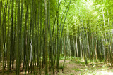 Fototapety Path of bamboo forest