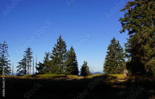 canvas print picture Wandern im Bayerischen Wald