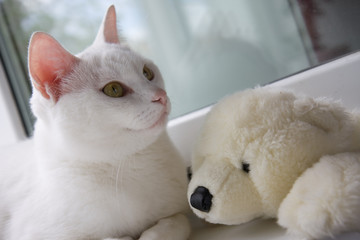 white cat in the house at the open window