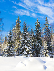 Bright Winter Landscape with a lot of Snow