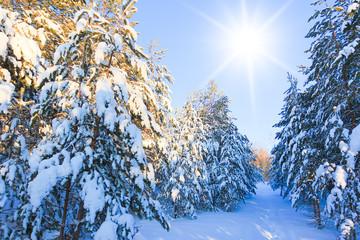 Bright Winter Reigns
