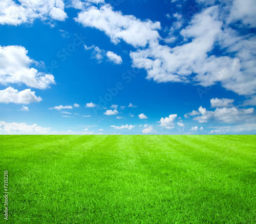 canvas print picture green grass