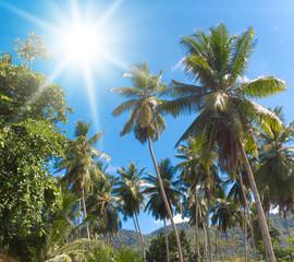 Sunlit Park Palms under the Sun