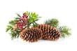 Obrazy na płótnie, fototapety, zdjęcia, fotoobrazy drukowane : Christmas tree branch with holly decor