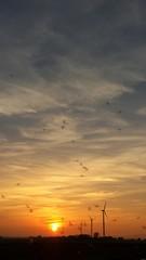 Schnaken tanzen im Sonnenuntergang