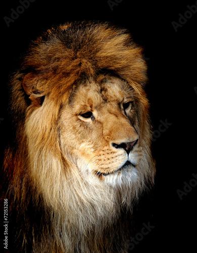Fotobehang Leeuw Lion portrait
